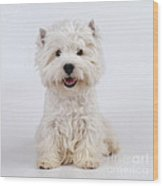 West Highland White Terrier Dog Wood Print