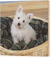 West Highland White Terrier Puppy Wood Print