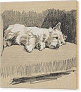 West Highlander, 1930 Wood Print