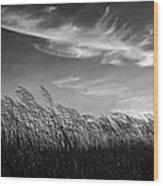 West Wind Bw Wood Print