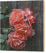 Westerland Rose Wood Fence Wood Print
