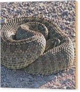 Western Dakota Prairie Rattlesnake Wood Print