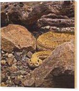 Western Diamondback Rattlesnake 2 Wood Print