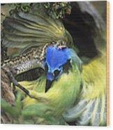 Western Diamondback Rattlesnake Striking Green Jay Wood Print
