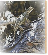 Western Fence Lizard Aka Blue-belly Lizard Wood Print