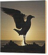 Western Gull At Sunset California Wood Print