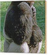 Western Lowland Gorilla Silverback Wood Print
