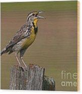 Western Meadowlark.. Wood Print