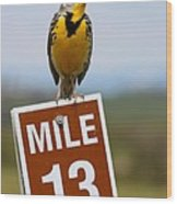 Western Meadowlark On The Mile 13 Sign Wood Print