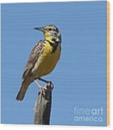 Western Meadowlark Perching Wood Print
