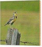 Western Meadowlark Wood Print