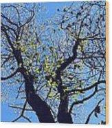 Western Michigan Trees 1 Wood Print