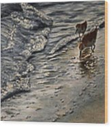 Western Sandpiper Wood Print