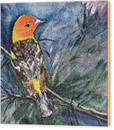 Western Tanager At Mt. Falcon Park Wood Print