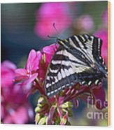Western Tiger Swallowtail Butterfly On Geranium Wood Print