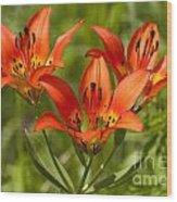 Western Wood Lily Wood Print