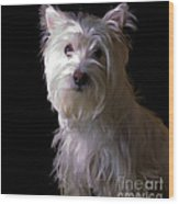 Westie Drama Wood Print by Edward Fielding