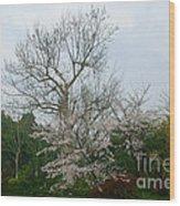 Westlake Park Wood Print
