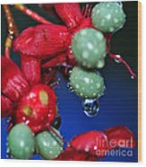 Wet Berries Wood Print by Kaye Menner