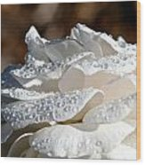 Wet Diamonds Wood Print