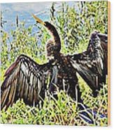 Wet Feathers Wood Print