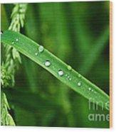 Wet Grasses Wood Print