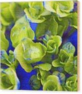 Wet Hydrangea Wood Print