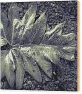 Wet Leaf Wood Print