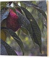 Wet Peach Wood Print