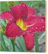 Wet Red Razzmatazz Daylily 1 Wood Print
