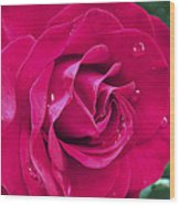 Wet Rose Wood Print by Kenneth Feliciano