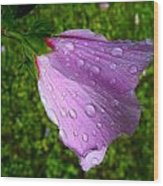 Wet Rose Of Sharon 2 Wood Print