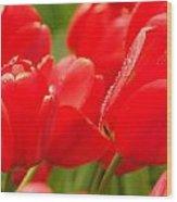 Wet Tulips Wood Print