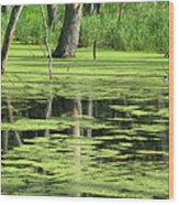 Wetland Reflection Wood Print