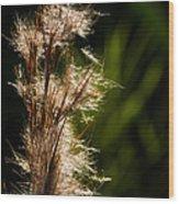 Wetland Sparkles Wood Print