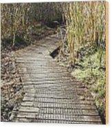 Wetland Walk Wood Print