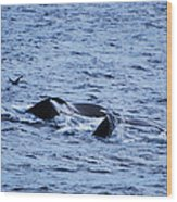 Whale 2 Wood Print by Lorena Mahoney