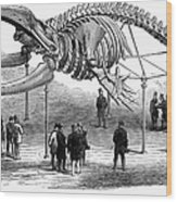 Whale Skeleton, 1866 Wood Print