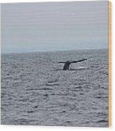 Whale Tail 2 Wood Print