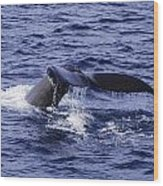 Whale Tail 2 Wood Print by Lorena Mahoney