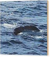 Whale Tail 3 Wood Print