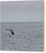 Whale Tail 8 Wood Print