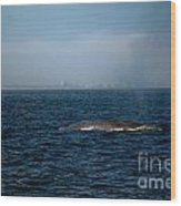 Whale Watching Wood Print