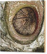 What A Birch Wood Print