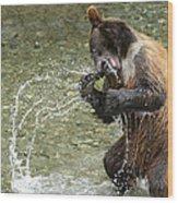 What A Show Little Bear Wood Print