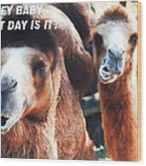 Camel What Day Is It? Wood Print