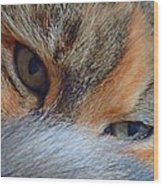 Who Disturbs My Cat Nap? Wood Print