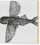 What The Flying Fish Wood Print