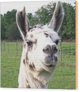 Rare Polka Dot Llama Pogo Wood Print