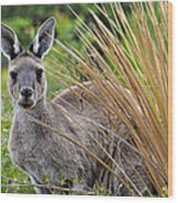 What'ya Lookin' At? Wood Print by Sally Nevin